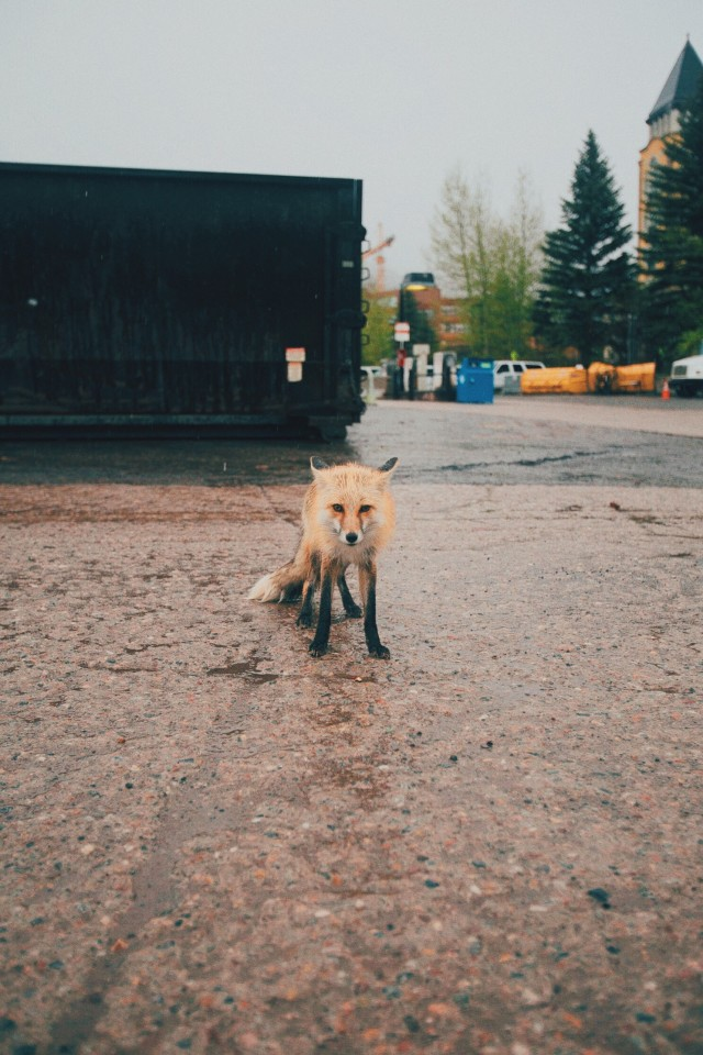Free authentic foxing photo on Reshot