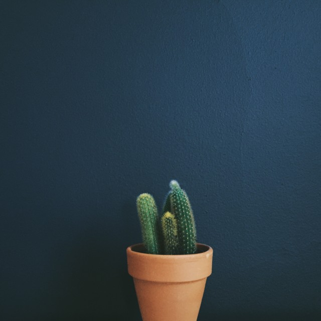 Cactus, terra cotta, blue, green, plant, house plant, home decor