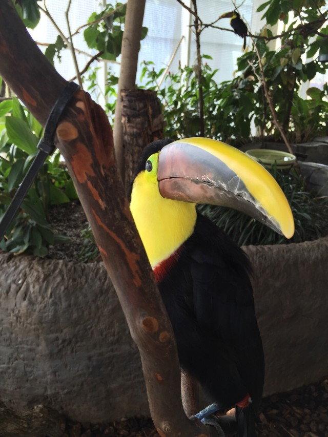 Got this photo of a toucan at the local a aquarium. Shot on an iPhone 6.
