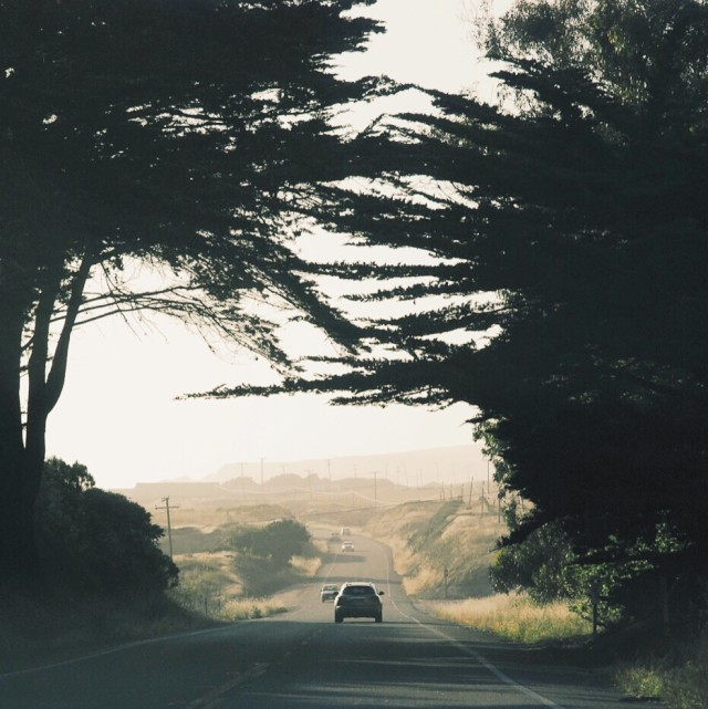 Trees over the road along Highway 1