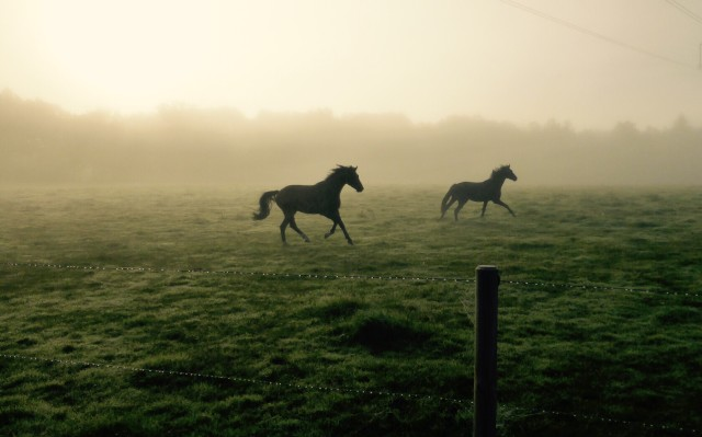 Horses running in the morning light