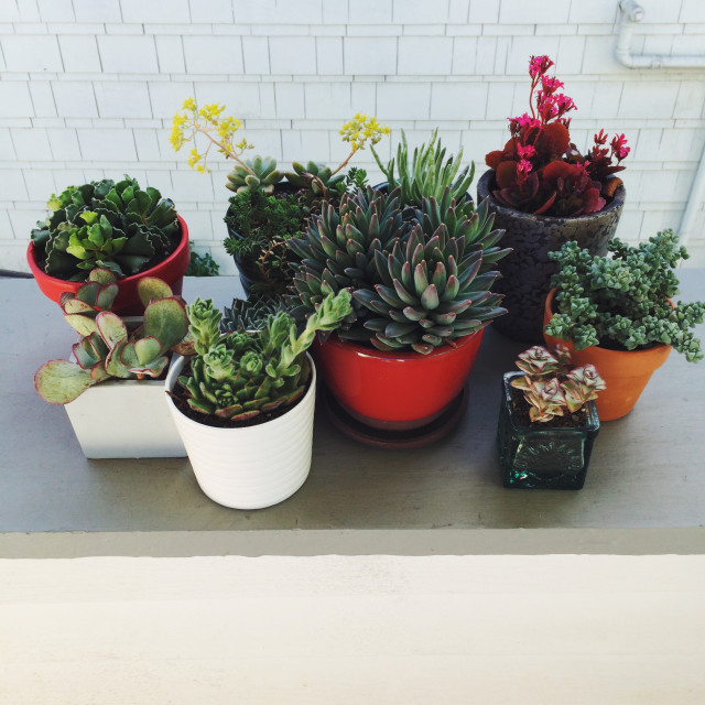 My collection of succulents in colorful pots