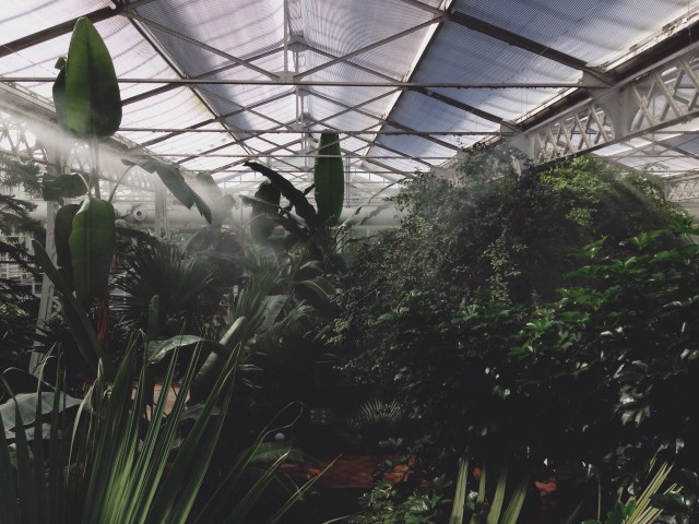 Tropical environment in a greenhouse