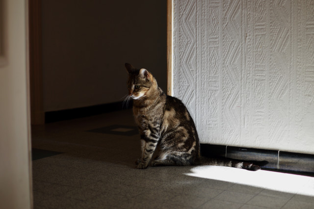 Free authentic tabby photo on Reshot