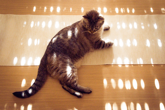 Cat in dots.