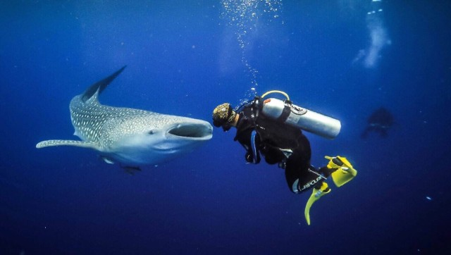 Free authentic diving photo on Reshot