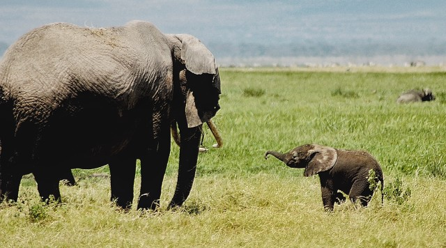 Love baby elephants 🐘
