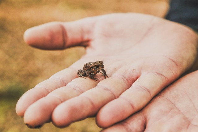A little little frog sitting on a mans open hand