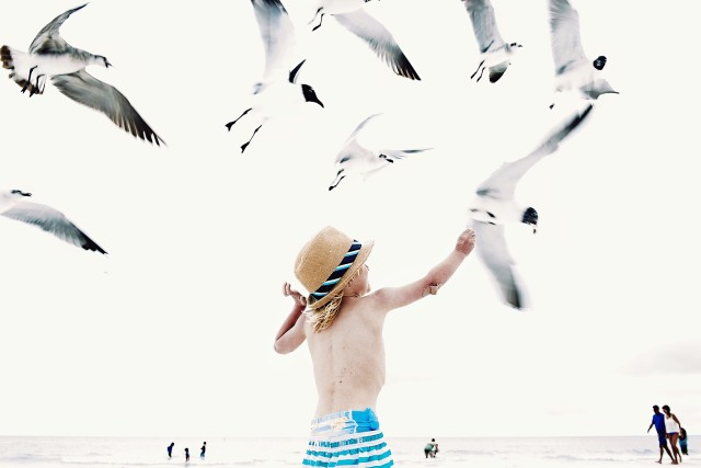 Seagull flocks and children memories