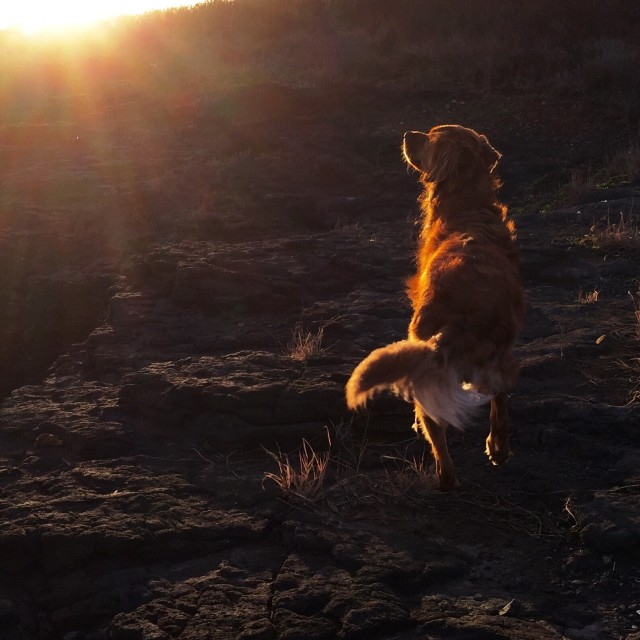 Ruby following the sun