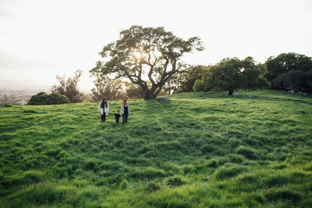 Free authentic green grass photo on Reshot