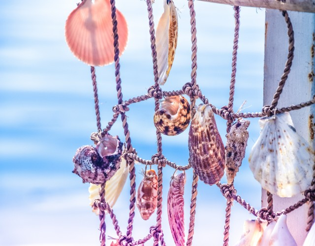 Summer memories  pastel seashells