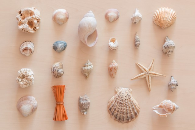 Decoration by sea shells