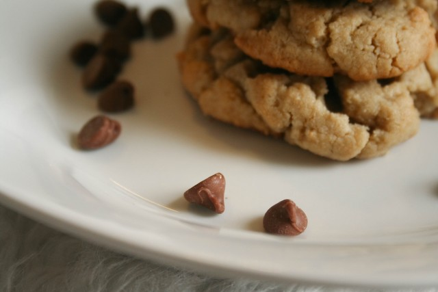 Sun Butter Cookies and Chocolate Chips on a White Dish.