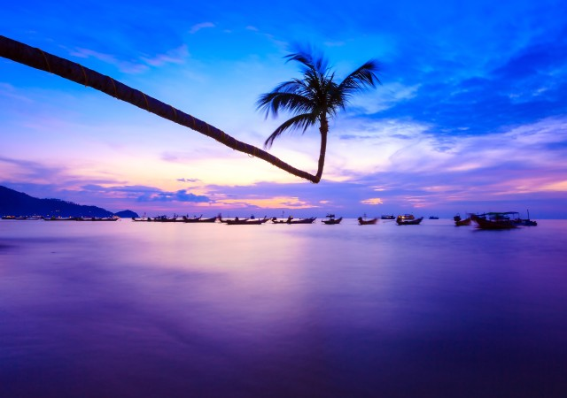 coconut tree by sea at twilight
