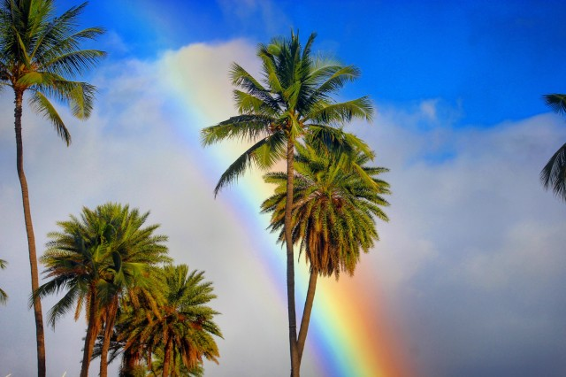 Free authentic palm trees photo on Reshot