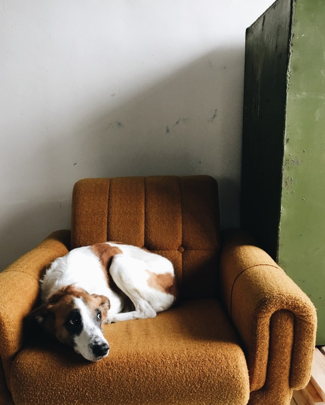 Dog on the sofa