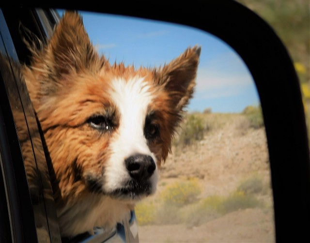 A celebration of the companionship between canines and humans, National Take Your Dog to Work Day, Friday after Father's Day, hopes to inspire others to adopt from shelters and humane societies.