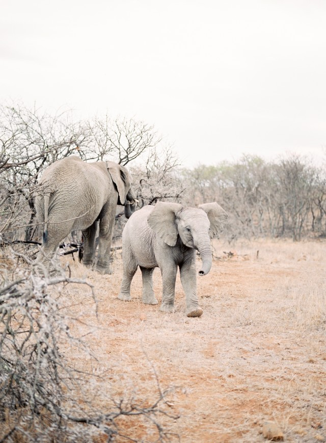 Free authentic safari photo on Reshot