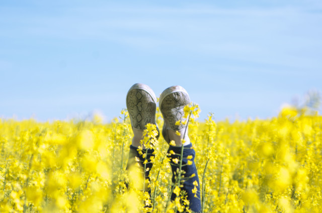 a field of flowers, motivation, achievement, copy space, blue, yellow, green, memo, happiness, sky, space, background for text,  joy, upside down, sky, flowers, spring, summer, copy space, background, Wallpaper, legs, upside down, fun, girl, joy,  youth, mood, simple, minimalism,  flowers, spring, blue, yellow, sky,