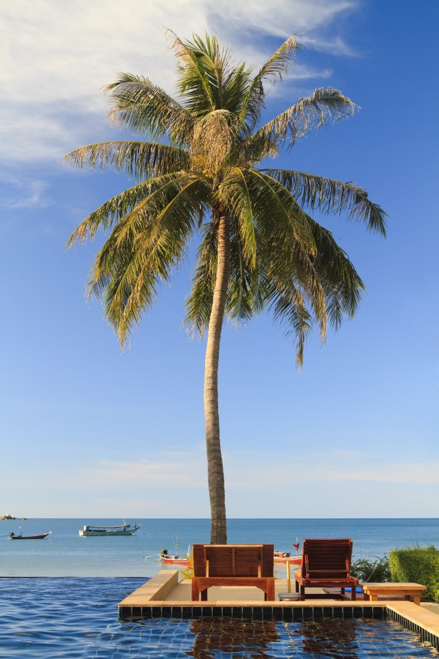 Paradise palm, a single coconut palm tree against a blue Thai sky. Luxury swimming pool by the sea with horizon and wooden bed for sunbathing, outdoors, nobody with room for copy space. Tropical island atmosphere tropics warm sunny day holiday and vacations image in Koh Phanang Thailand