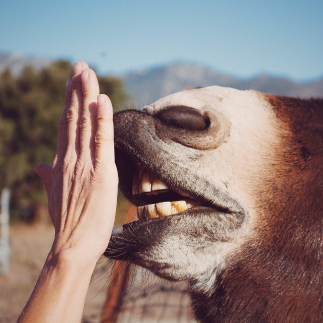 Gimme five donkey !