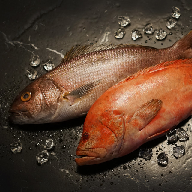 The raw fishes
