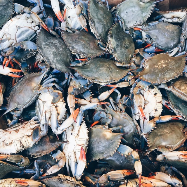 Blue crabs in China Town