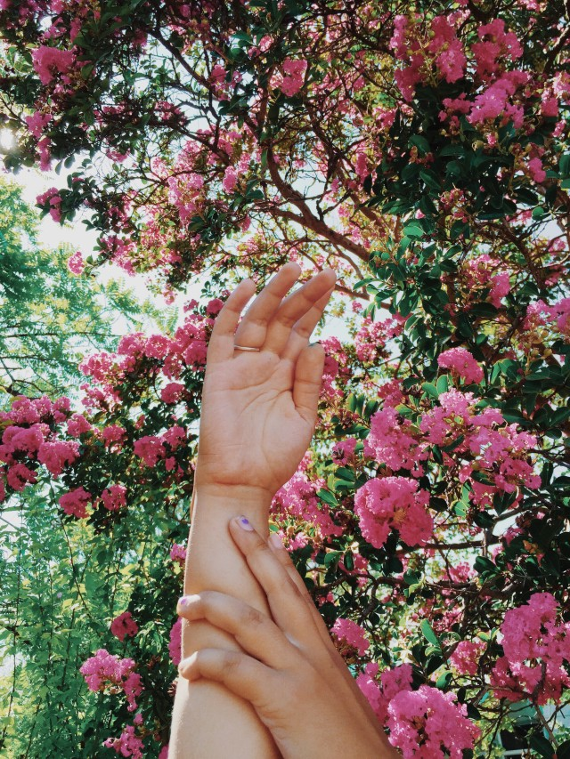 My girlfriends hand reaching pink flowers.