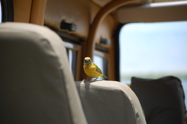 a bird got in the truck!