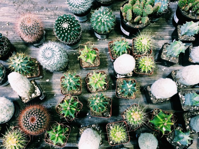 Succulent world of cacti.