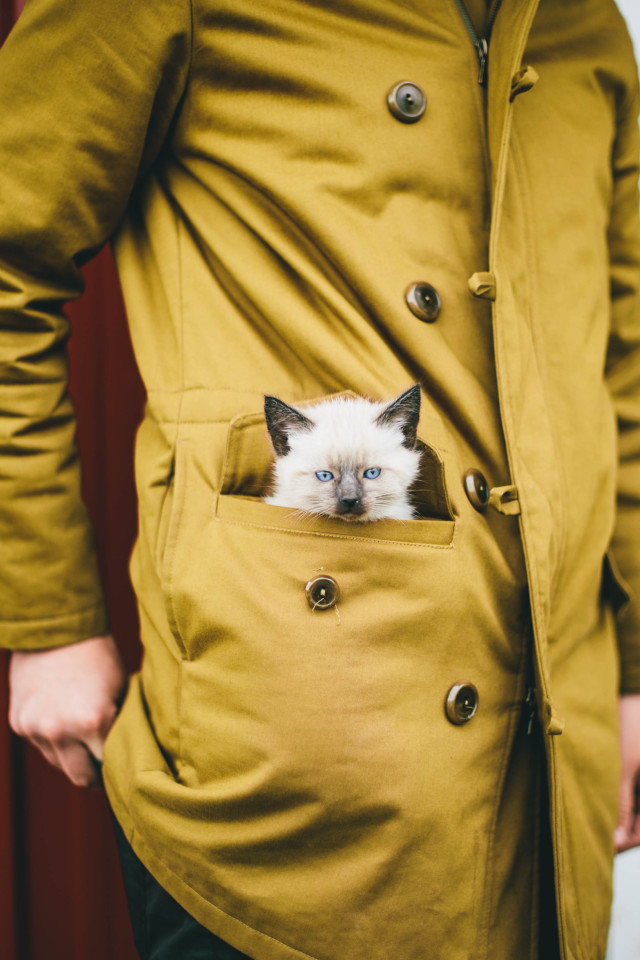 Kitten in coat pocket