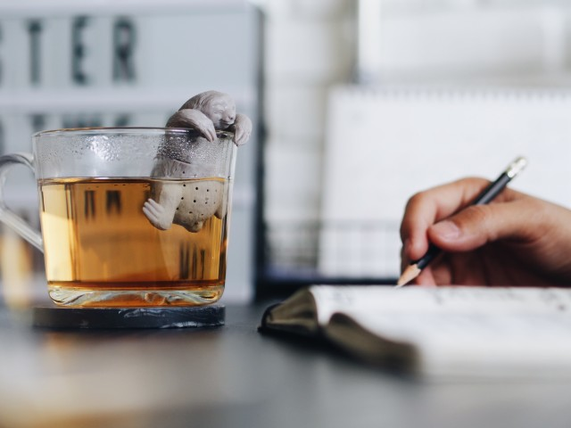 Cup of tea with sloth in the working space   morning time.