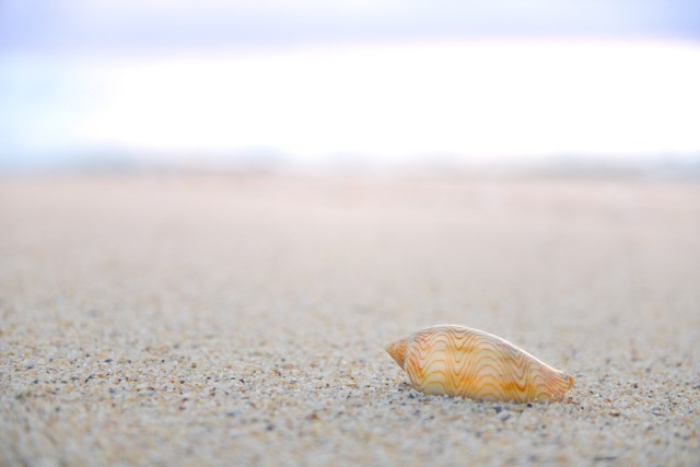Beautiful shell on the sand