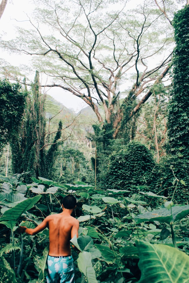 Into the Jungle🌿