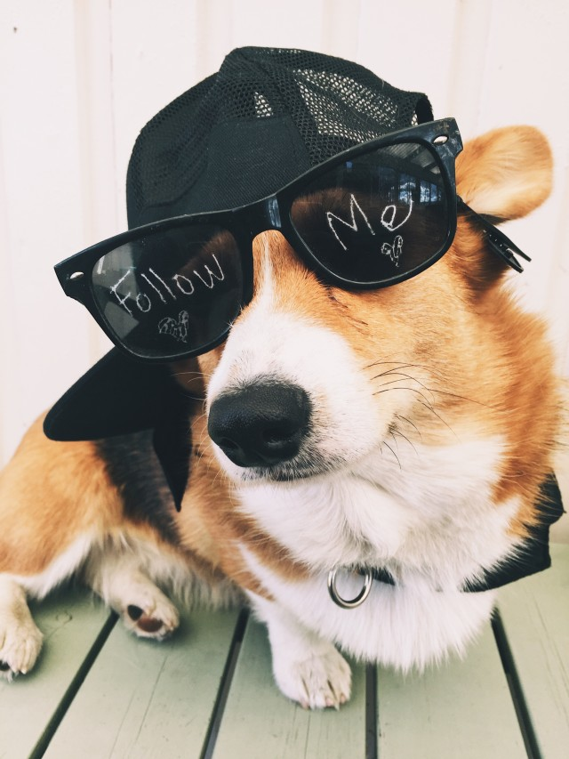 Dog with hat and sunglasses with the text follow me