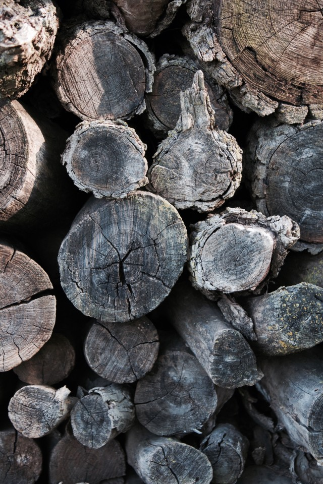 Ends of cut logs for firewood