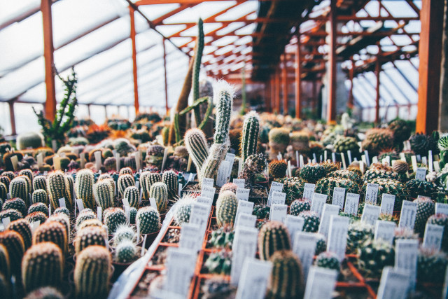 Free authentic cactus photo on Reshot