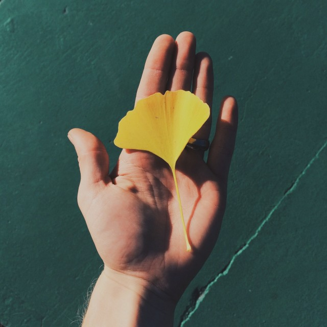 A yellow leaf in the palm of a hand.