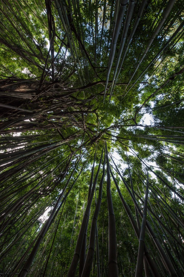 Bamboo Forest from the ground up