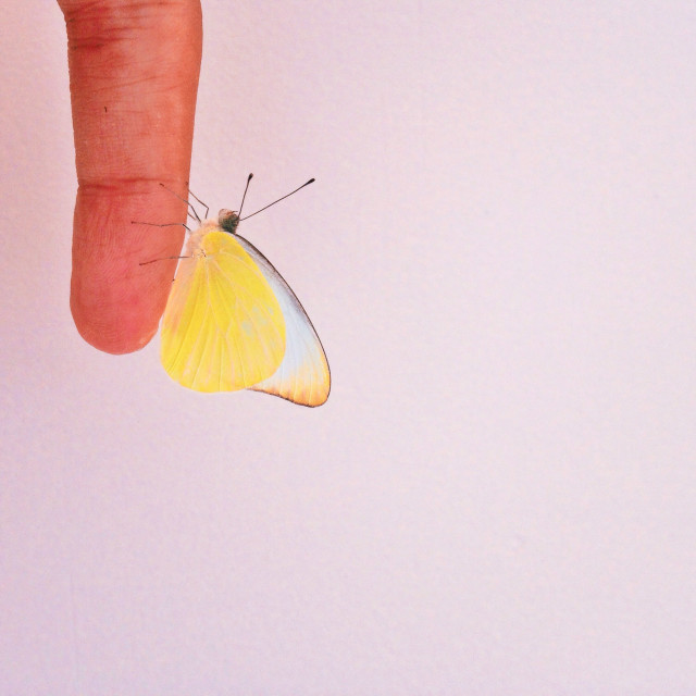 Free authentic butterfly photo on Reshot