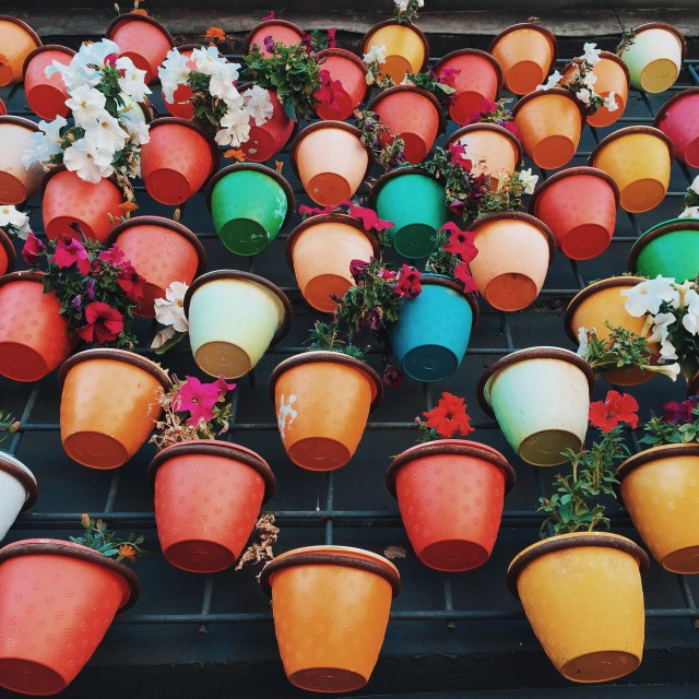 Free authentic potted plants photo on Reshot