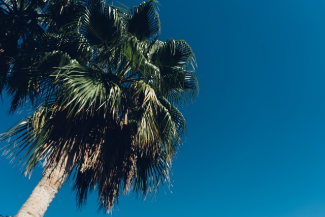 Free authentic tropical photo on Reshot