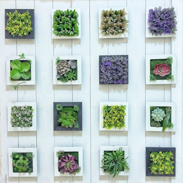 Free authentic succulents photo on Reshot