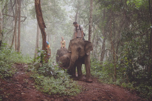 A beautiful misty morning riding elephants through the forest in Chiang Mai, Thailand.