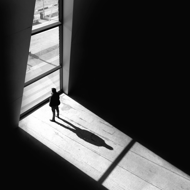 Free Silhouette Photo from Reshot