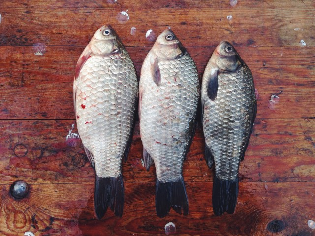 Three fishes on the wooden floor