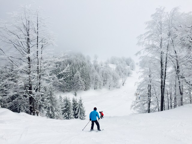 Skiers on the ski slope surrounded by snowy forest
