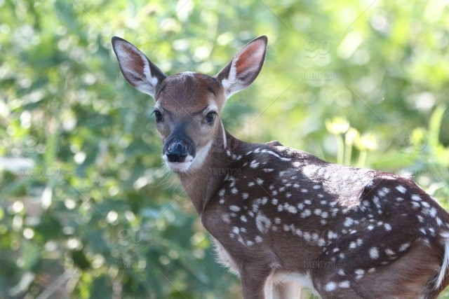 We are a whitetail deer breeding facility located in Brenham