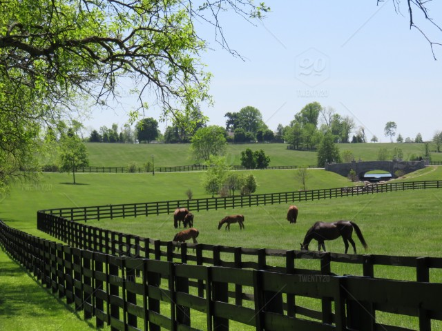 stock photo, horses, farms, kentucky, horsesofinstagram, thoroughbred, racehorse